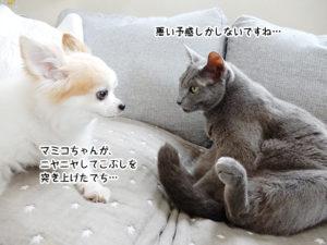 マミコちゃんが、 ニヤニヤしてこぶしを 突き上げたでち…悪い予感しかしないですよ…