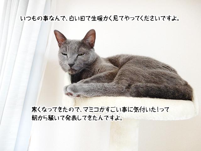 いつもの事なんで、白い目で生暖かく見てやってくださいですよ。寒くなってきたので、マミコがすごい事に気付いた!って朝から騒いで発表してきたんですよ。