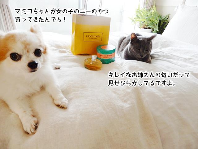 マミコちゃんが女の子のニーのやつ買ってきたんでち!キレイなお姉さんの匂いだって見せびらかしてるですよ。