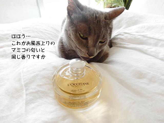 ほほう…これがお風呂上りのマミコの匂いと同じ香りですか