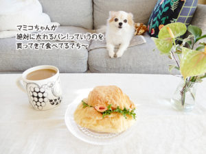 マミコちゃんが 絶対に太れるパン!っていうのを 買ってきて食べてるでち~