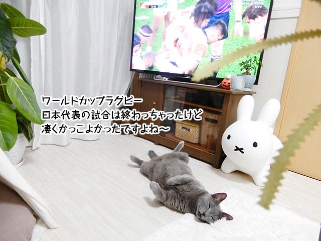 ワールドカップラグビー 日本代表の試合は終わっちゃったけど 凄くかっこよかったですよね~