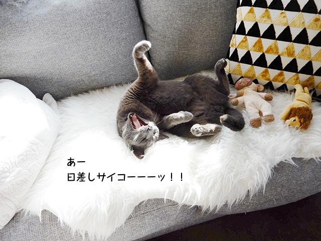 あー日差しサイコーーーッ!!