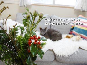 クリスマスがやってくる!とマミコが楽しそうにしているですよ。