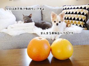今日はお天気で気持ちいいですよ。まんまる果物並べてるでち