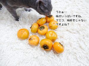 うわぁ…柿がいっぱいですね。マミコ、柿好きじゃないですよね?