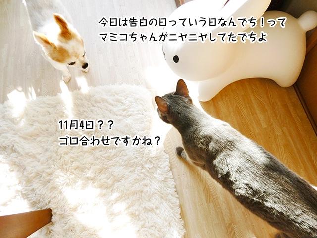 今日は告白の日っていう日なんでち!ってマミコちゃんがニヤニヤしてたでちよ!11月4日?ゴロ合わせでしょうかね?