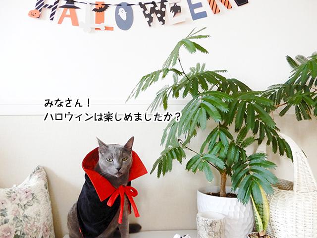 みなさん!ハロウィンは楽しめましたか?