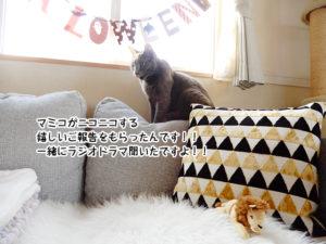 マミコがニコニコする嬉しいご報告をもらったんです!!一緒にラジオドラマ聞いたですよ!!