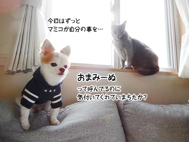 今日はずっとマミコが自分の事を…おまみーぬって呼んでるのに気付いてくれていまちたか?