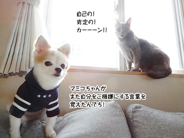 マミコちゃんがまた自分をご機嫌にする言葉を覚えたんでち!
