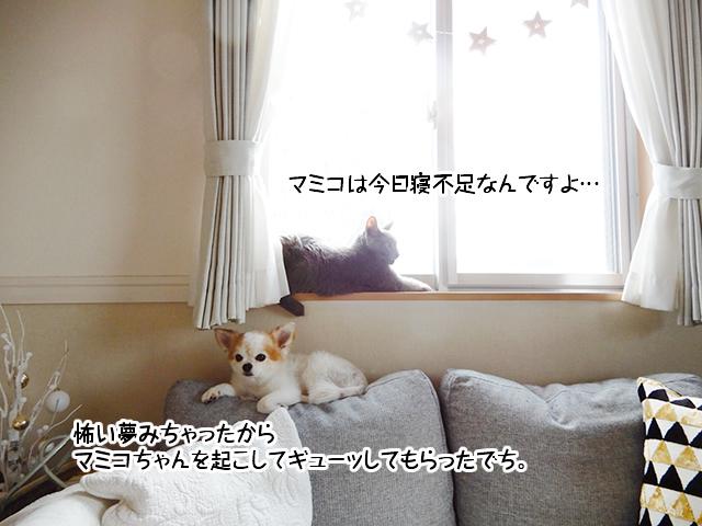 マミコは今日寝不足なんですよ。怖い夢みちゃったからマミコちゃんを起こしてギューッしてもらったでち。
