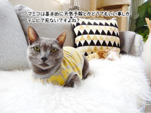 マミコは基本的に天気予報とかどうでもいい事しかテレビで見ないですよね?