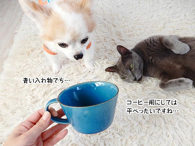 コーヒー用にしては平べったいですね…青い入れ物でち。