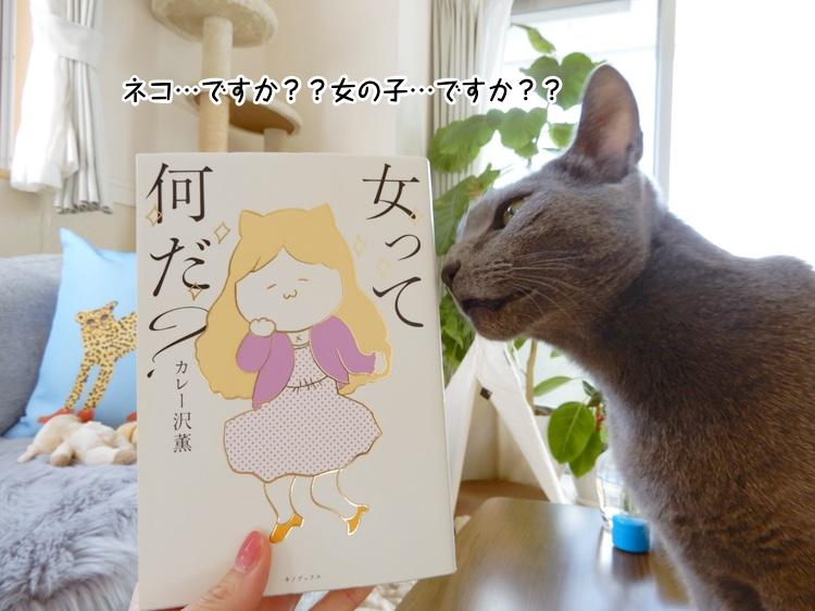 ネコ…ですか??女の子…ですか??