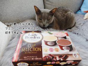 アイス買ったんですね。マミコ、このメーカーさん好きですよね。
