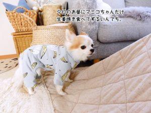 今日のお昼にマミコちゃんだけ生姜焼き食べてずるいんでち。