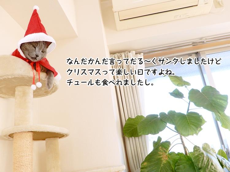 なんだかんだ言ってだる〜くサンタしましたけどクリスマスって楽しい日ですよね。ちゅーるも食べれましたし。