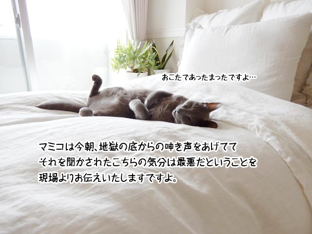 マミコは今朝、地獄の底からの呻き声をあげててそれを聞かされたこちらの気分は最悪だということを現場よりお伝えいたしますですよ。
