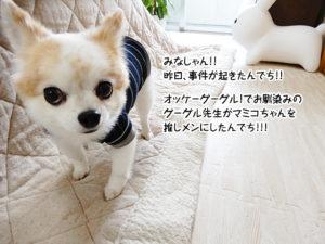 オッケーグーグル!でお馴染みのグーグル先生マミコちゃんを推しメンにしたんでち!!!