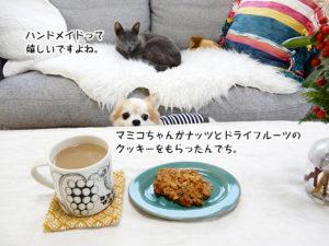 マミコちゃんがナッツとドライフルーツのクッキーをもらったんでち。ハンドメイドって嬉しいですよね。