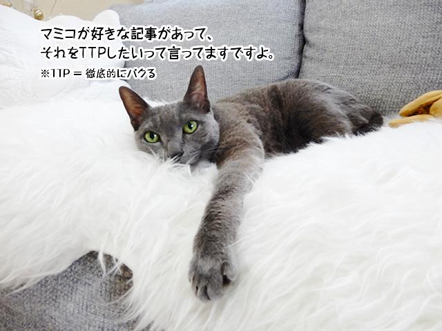 マミコが好きな記事があってそれをTTPしたいって言ってますよ。
