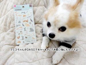 マミコちゃんがDAISOでキャッキャしてお買い物したんでちよ!
