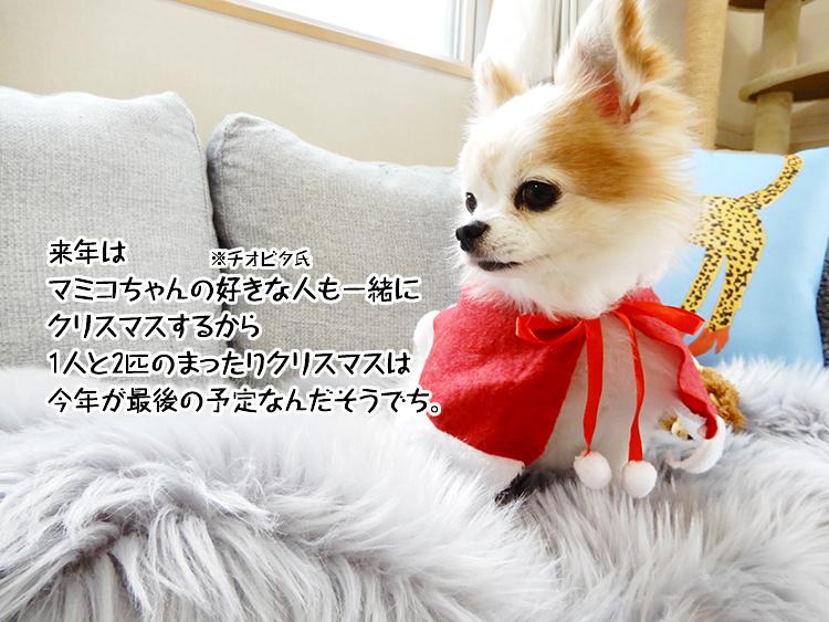 来年はマミコちゃんの好きな人も一緒にクリスマスするから1人と2匹のまったりクリスマスは今年が最後の予定なんだそうでち。