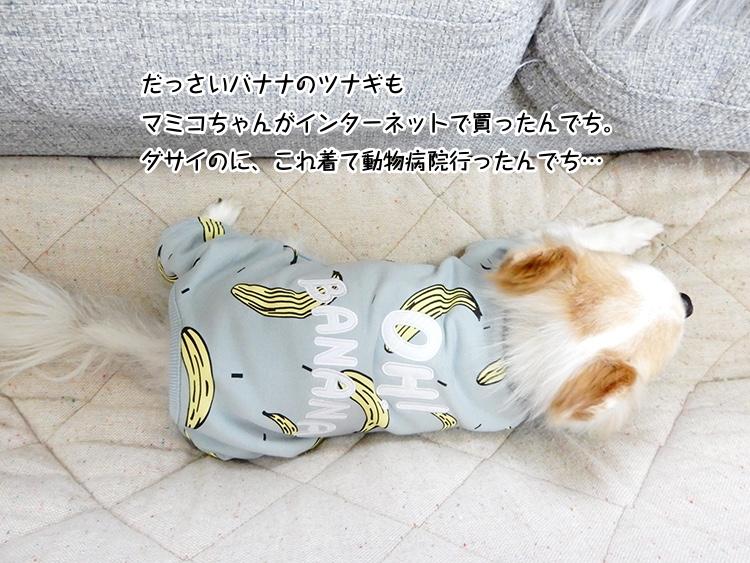だっさいバナナのツナギもマミコちゃんがインターネットで買ったんでち。ダサイのに、これ着て動物病院行ったんでち…