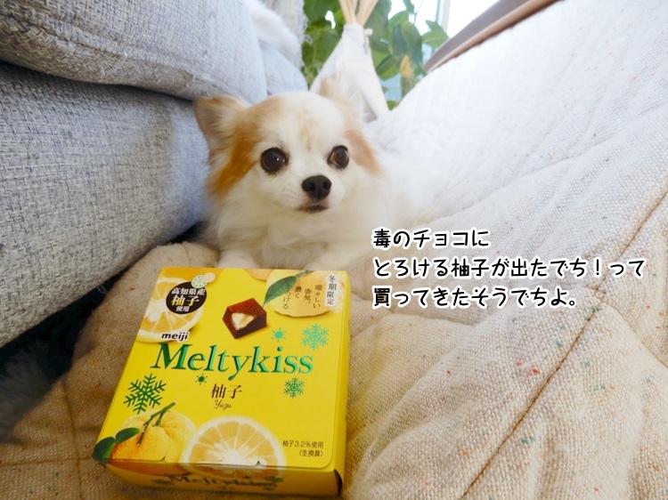 毒のチョコに とろける柚子が出たでち!って買ってきたそうでちよ。