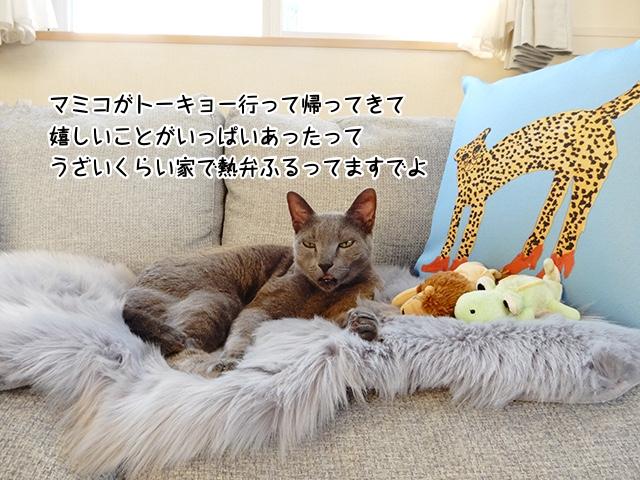 マミコがトーキョー行って帰ってきて嬉しいことがいっぱいあったってうざいくらい家で熱弁ふるってますでよ