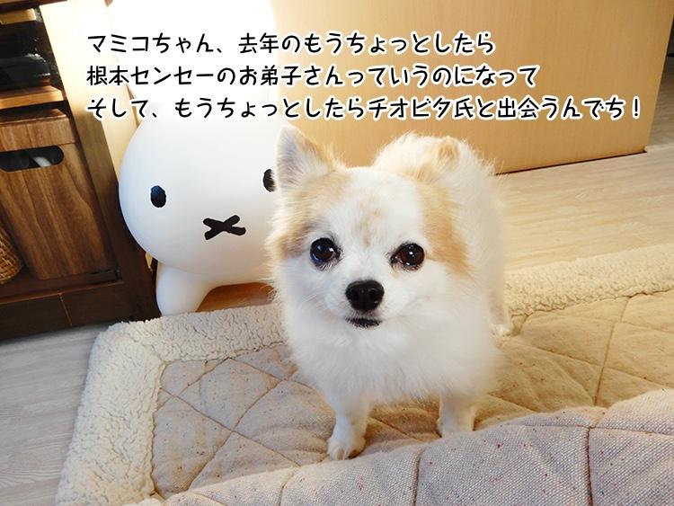 マミコちゃん、去年のもうちょっとしたら根本センセーのお弟子さんっていうのになってそして、もうちょっとしたらチオビタ氏と出会うんでち!