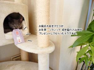 お風呂大好きマミコがお年賀…っていって、招き猫の入浴剤をプレゼントしてもらったそうですよ。