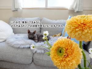 このお花、黄色くてまあるくてお花があるだけでお部屋が明るくなりますですね。