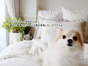 マミコちゃんの会社の人が面白い事言ったってことを言いたいそうでちよー