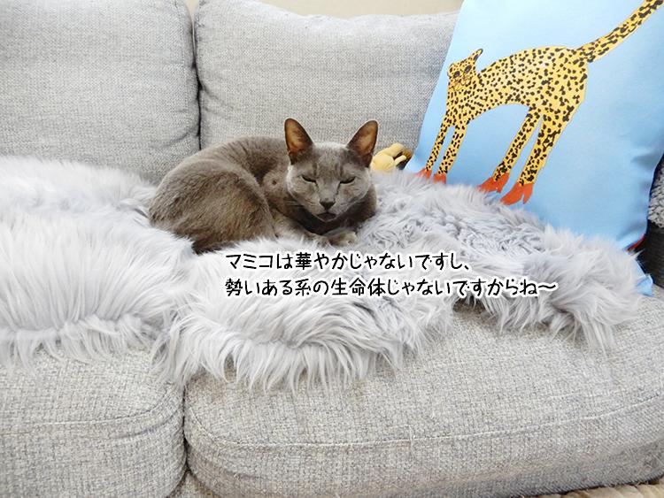 マミコは華やかじゃないですし、勢いある系の生命体じゃないですからね~