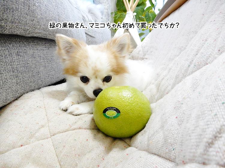 緑の果物さん、マミコちゃん初めて買ったでちか?
