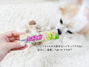 マミコちゃんが大好きなハイチュウでちね!自分にご褒美してあげたでちか?