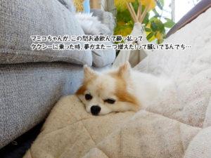 マミコちゃんが、この間お酒飲んで酔っ払ってタクシーに乗った時、夢がまた一つ増えた!って騒いでるんでち…