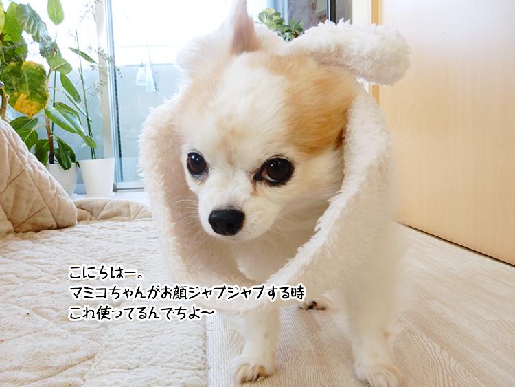こにちはー。マミコちゃんがお顔ジャブジャブする時これ使ってるんでちよ~