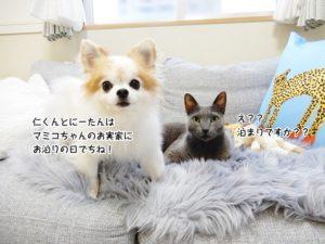 仁くんちにーたんはマミコちゃんのお実家にお泊りでちね!