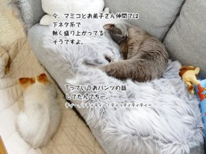 今、マミコとお弟子さん仲間では下ネタ系で熱く盛り上がっているそうですよ。Tっていうおパンツの話 してたんでちー。 ティー、ッティティー!ティッティティティー