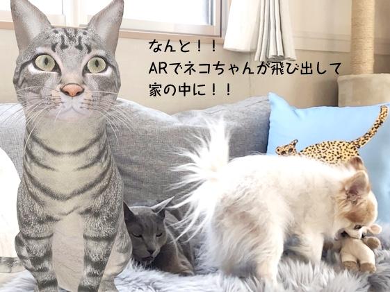 なんと!ARでネコちゃんが飛びだして家の中に!!