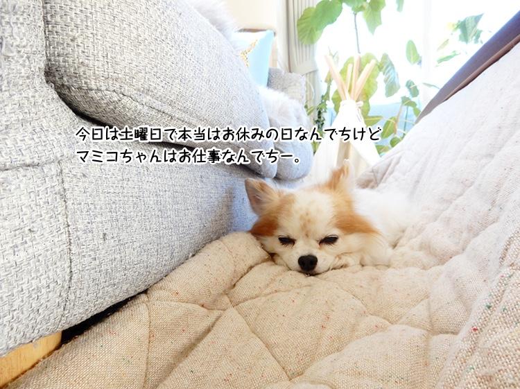 今日は土曜日で本当はお休みの日なんでちけどマミコちゃんはお仕事なんでちー。