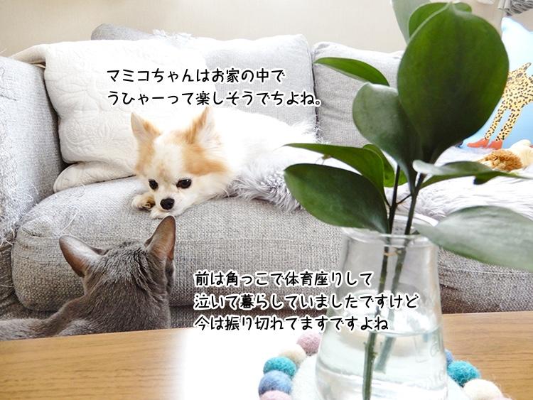 マミコちゃんはお家の中でうひゃーって楽しそうでちよね。前は角っこで体育座りして泣いて暮らしていましたですけど今は振り切れてますですよね