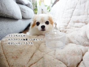 マミコちゃんがガラスの入れ物買ってきたって見せびらかしてるでち。