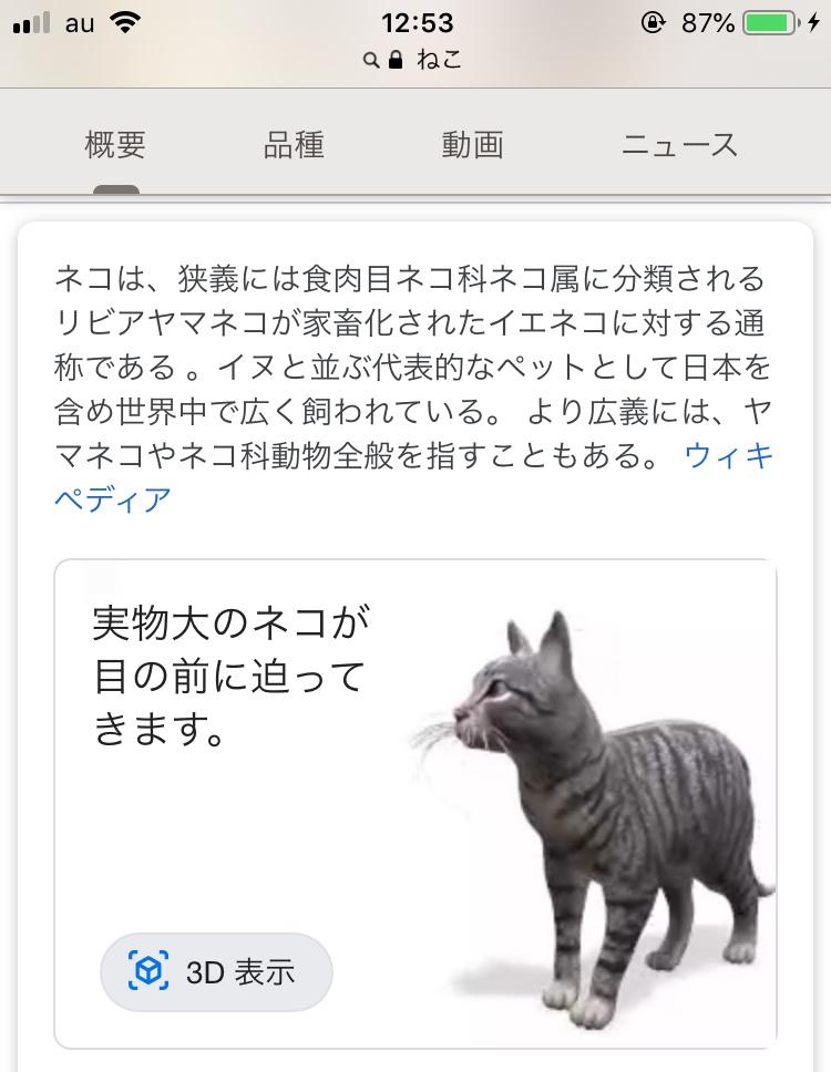 なにやら動いている猫のアニメーション??