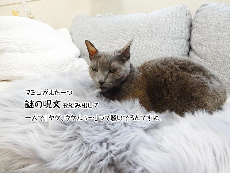 マミコがまた一つ謎の呪文を編み出して一人で「ヤダ、ウケルゥ~」って騒いでるんですよ。