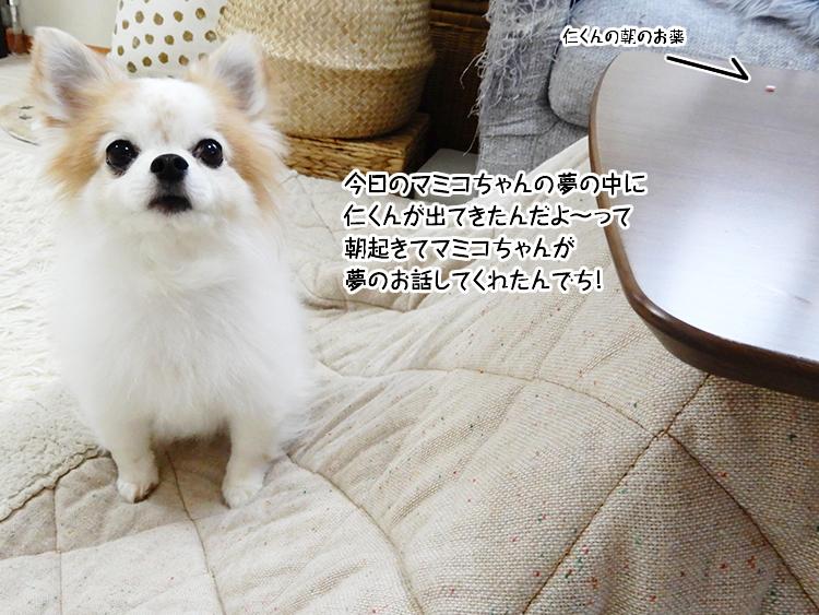 今日のマミコちゃんの夢の中に仁くんが出てきたんだよ~って朝起きてマミコちゃんが夢のお話してくれたんでち!