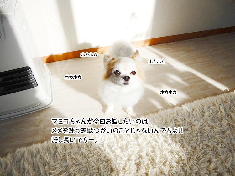 マミコちゃんが今日お話したいのはメメを洗う無駄つがいのことじゃないんでちよ!!話し長いでちー。